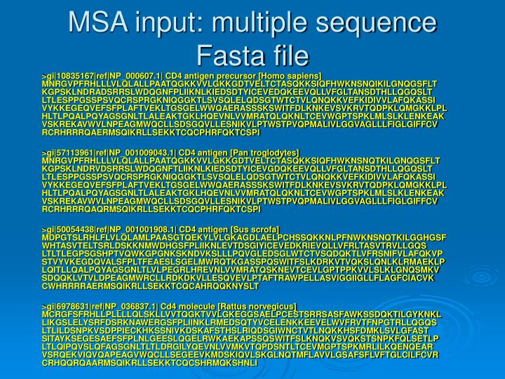 Msa input multiple sequence fasta file