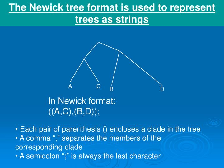 The Newick tree format is used to represent trees as strings