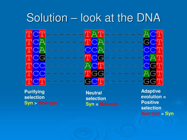 Solution – look at the DNA