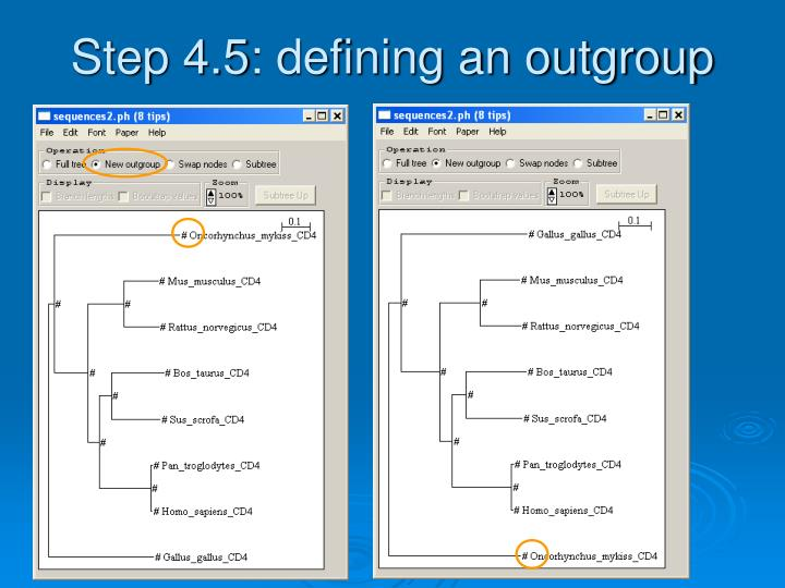 Step 4.5: defining an outgroup