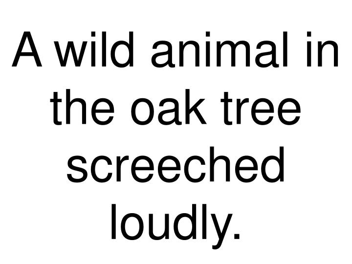A wild animal in the oak tree screeched loudly.