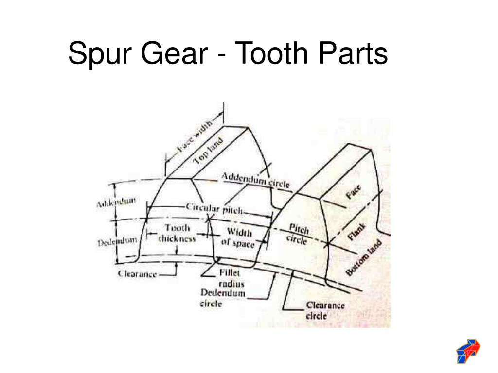 Spur Gear - Tooth Parts