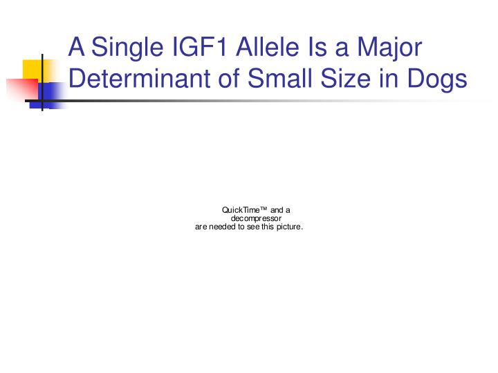 A Single IGF1 Allele Is a Major Determinant of Small Size in Dogs