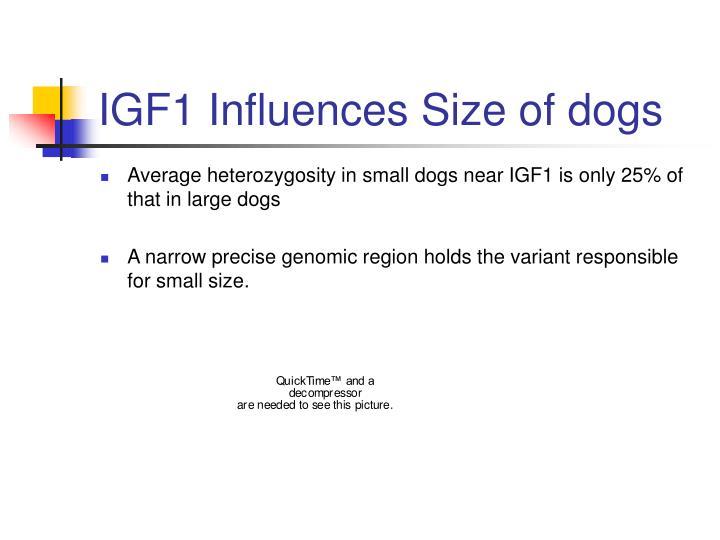 IGF1 Influences Size of dogs