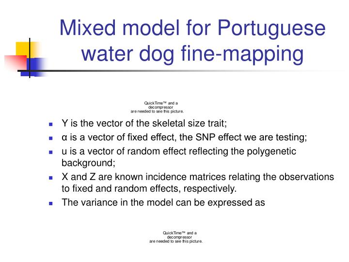 Mixed model for Portuguese water dog fine-mapping