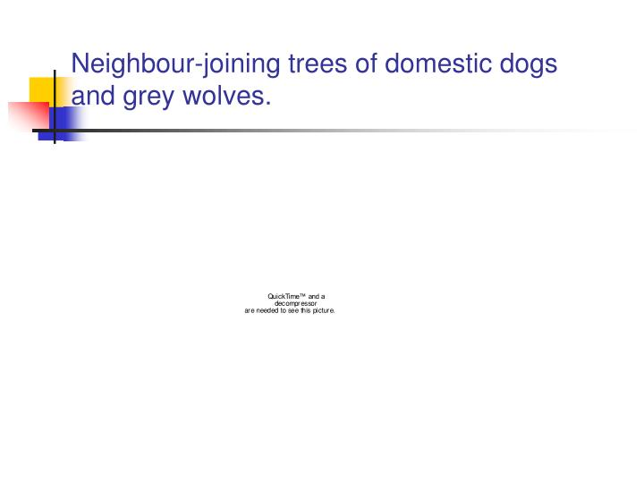 Neighbour-joining trees of domestic dogs
