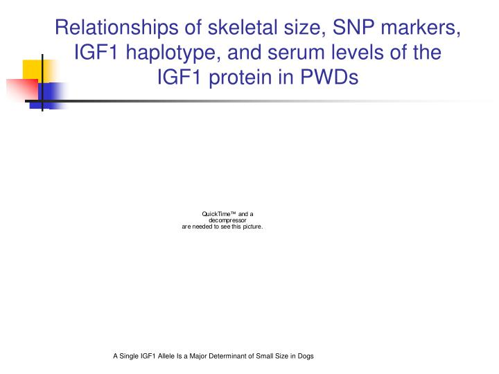 Relationships of skeletal size, SNP markers, IGF1 haplotype, and serum levels of the IGF1 protein in PWDs