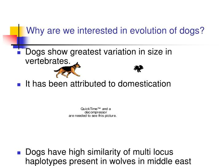 Why are we interested in evolution of dogs