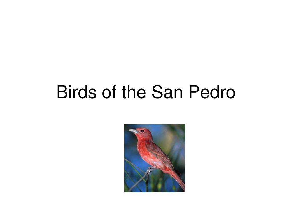 birds of the san pedro l.