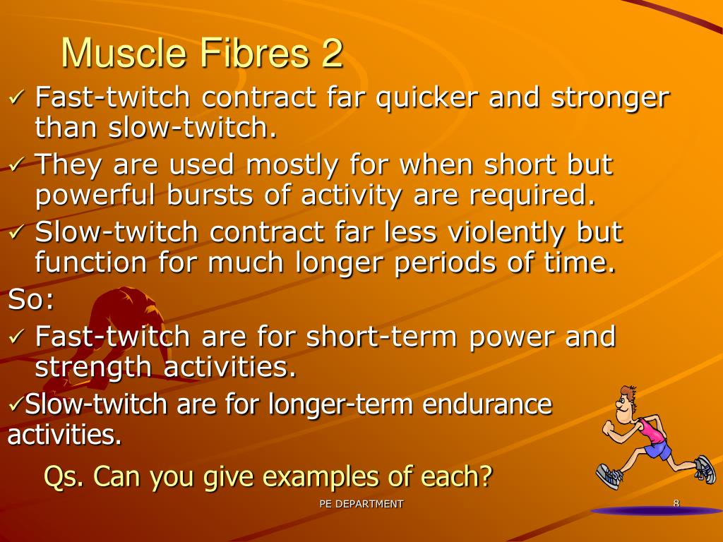 Muscle Fibres 2