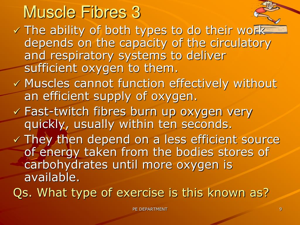 Muscle Fibres 3