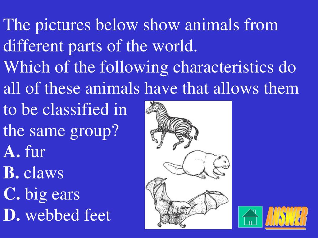 The pictures below show animals from different parts of the world.