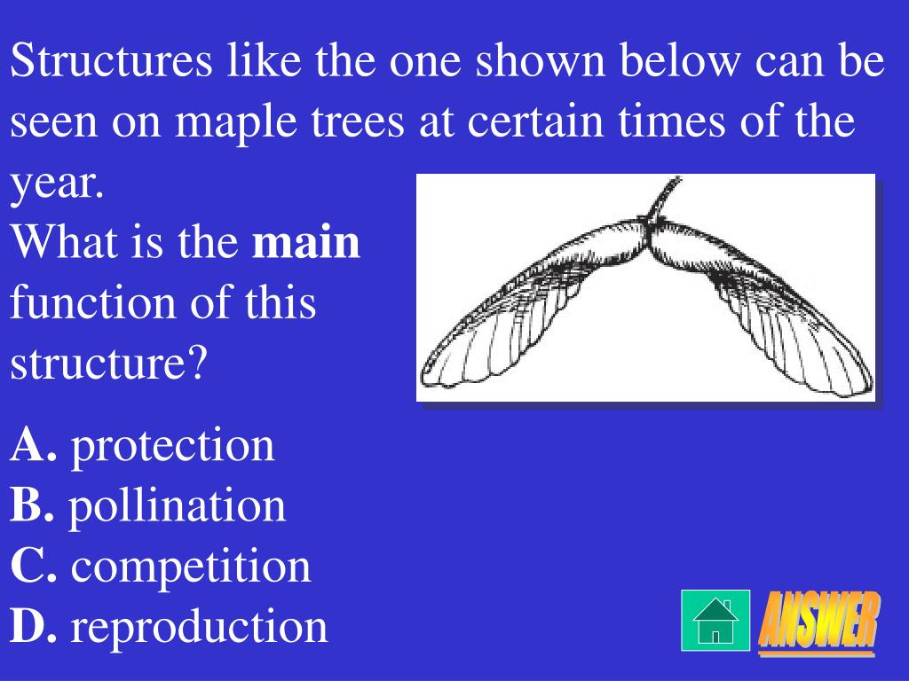 Structures like the one shown below can be seen on maple trees at certain times of the year.