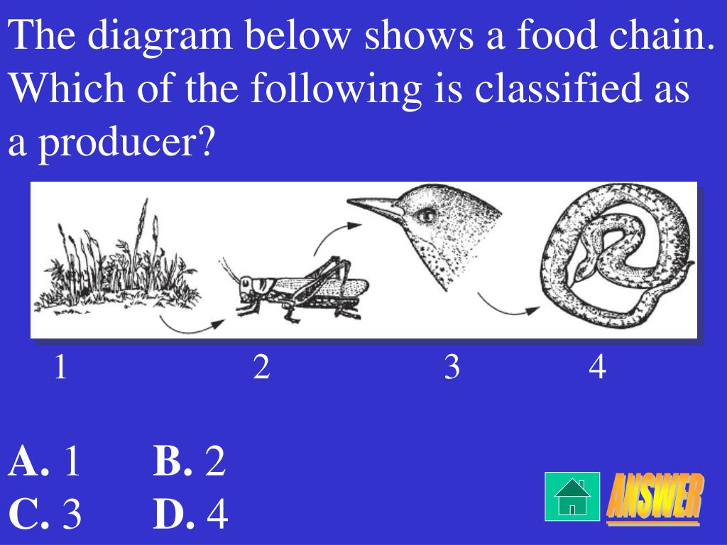 The diagram below shows a food chain.