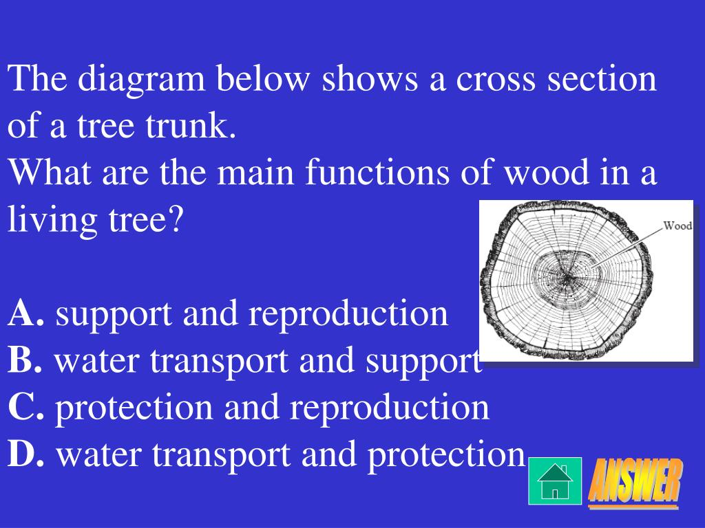 The diagram below shows a cross section of a tree trunk.