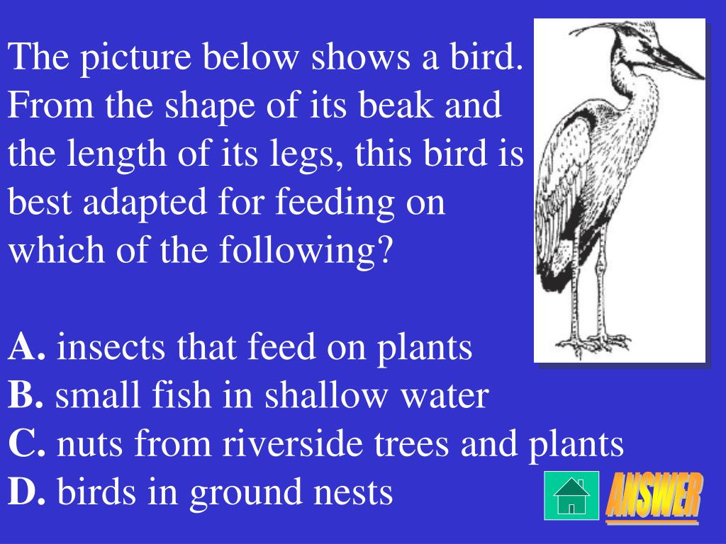 The picture below shows a bird.