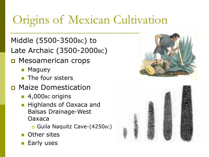 Origins of Mexican Cultivation