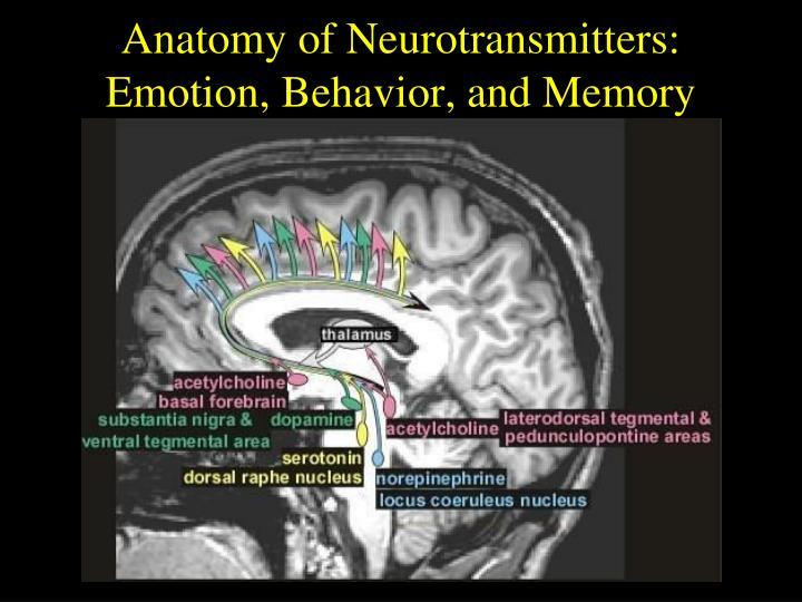 Anatomy of Neurotransmitters: