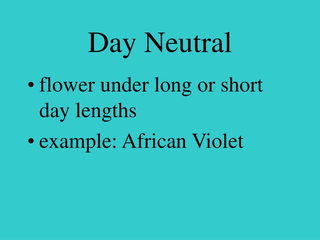 Day Neutral