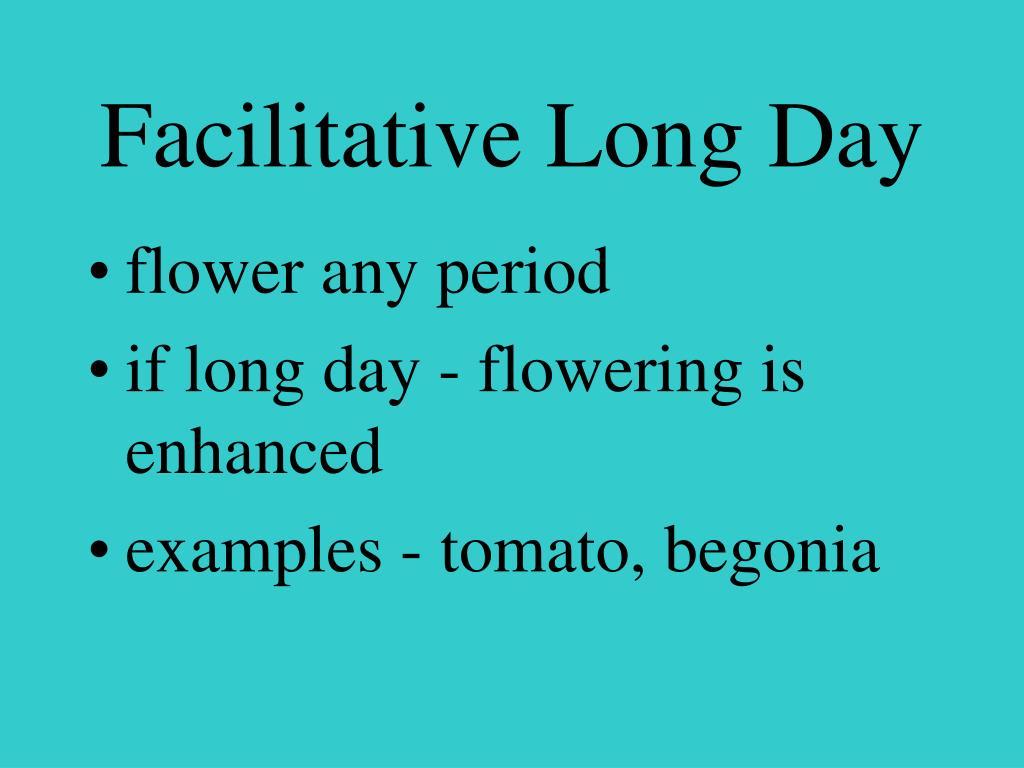 Facilitative Long Day