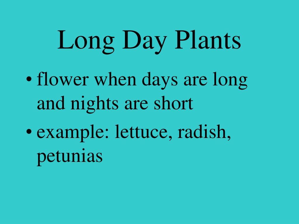 Long Day Plants