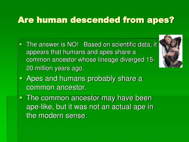Are human descended from apes?