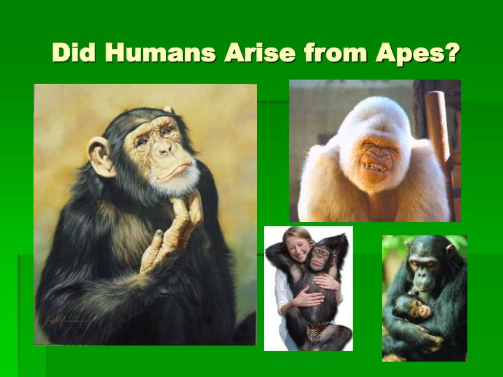 Did Humans Arise from Apes?