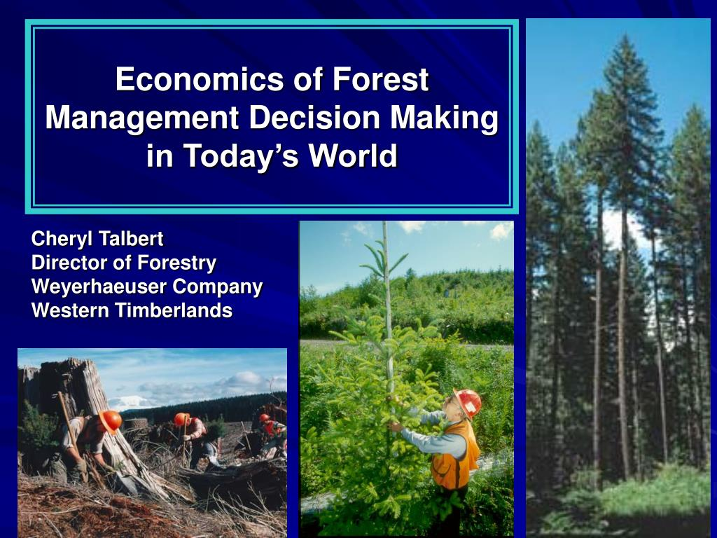 economics of forest management decision making in today s world l.