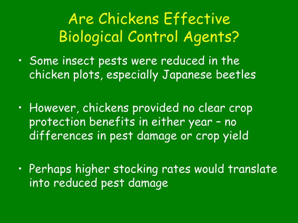Are Chickens Effective