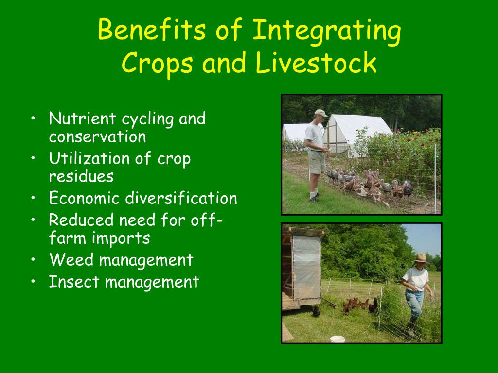 Benefits of Integrating