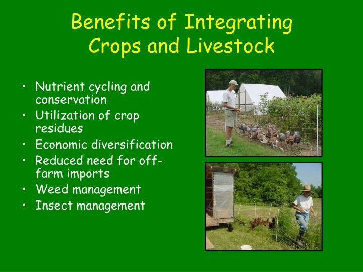 Benefits of integrating crops and livestock