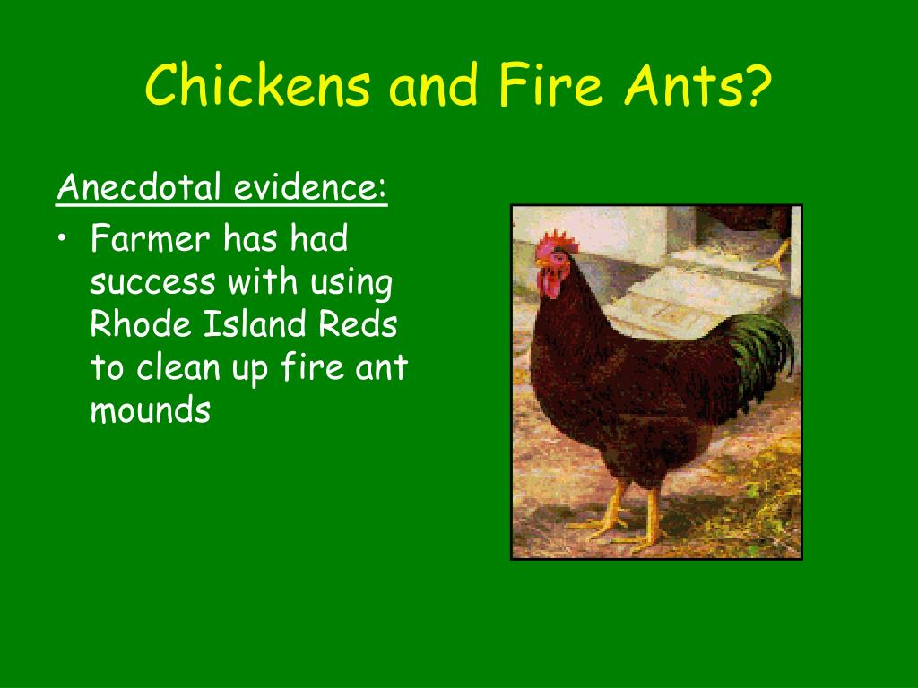 Chickens and Fire Ants?