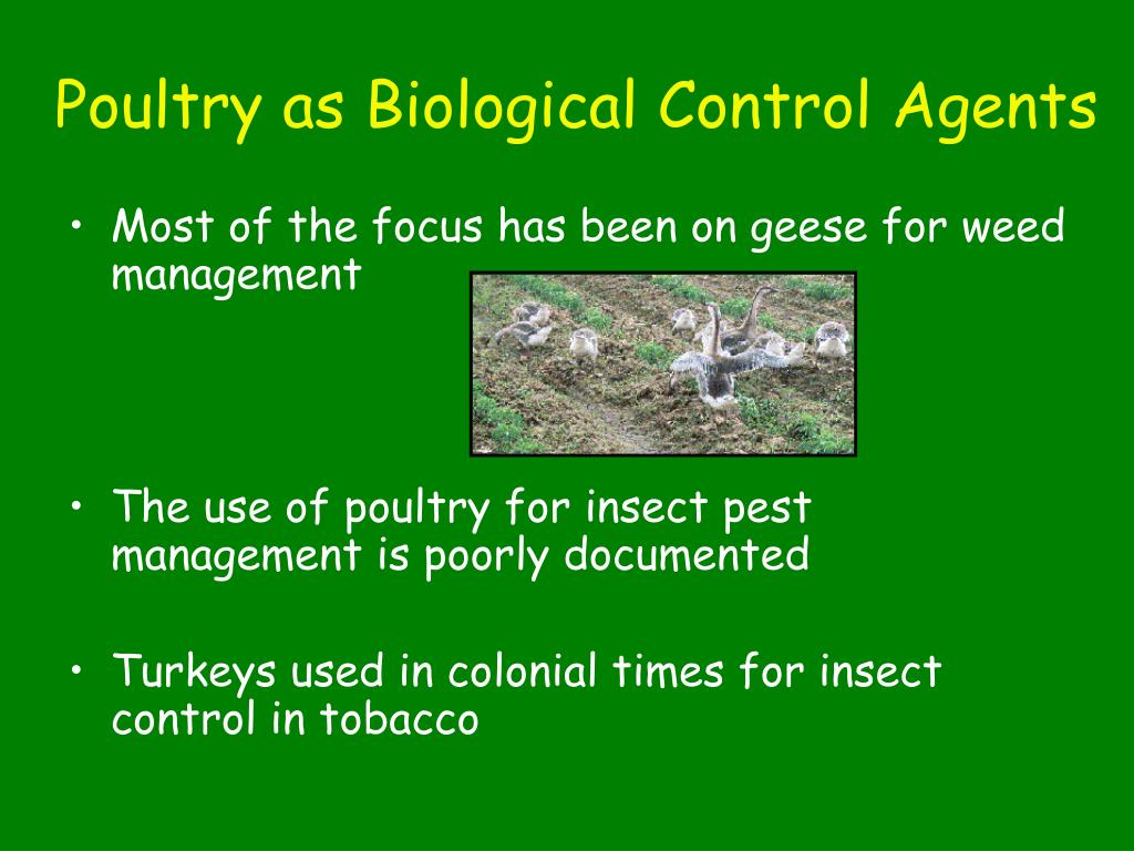 Poultry as Biological Control Agents
