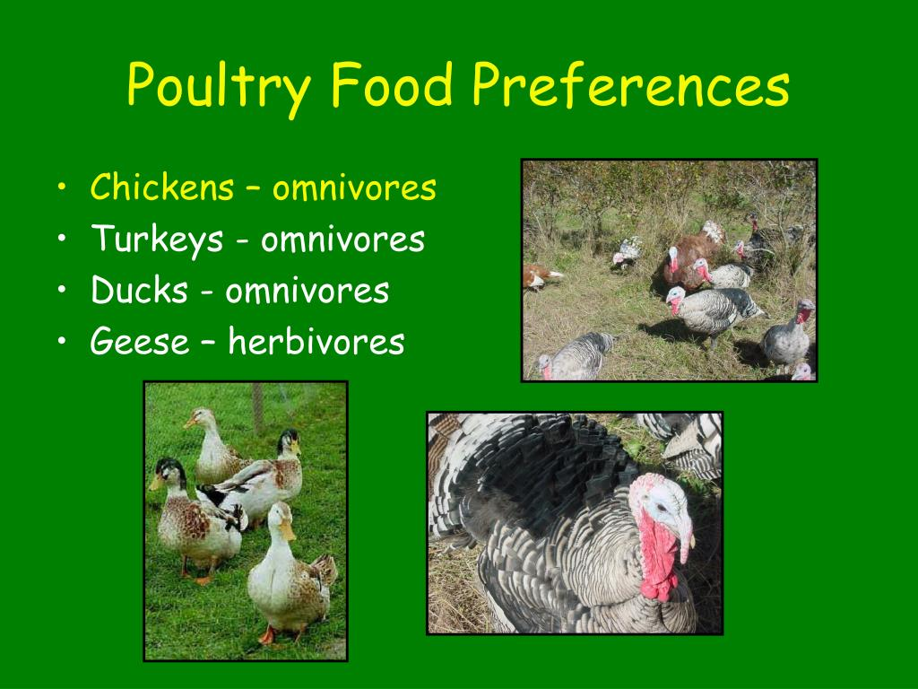 Poultry Food Preferences