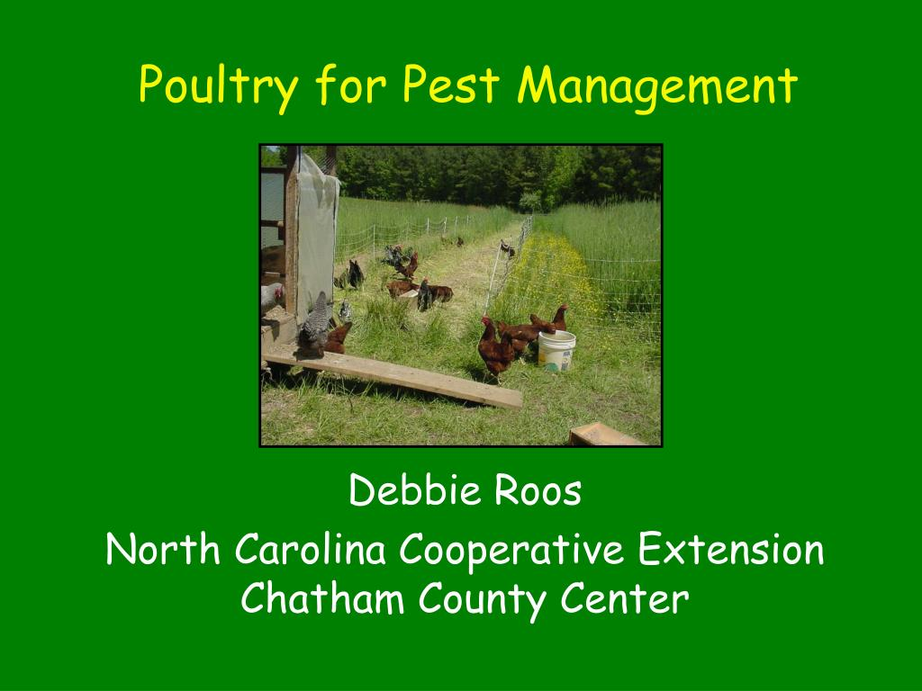 Poultry for Pest Management