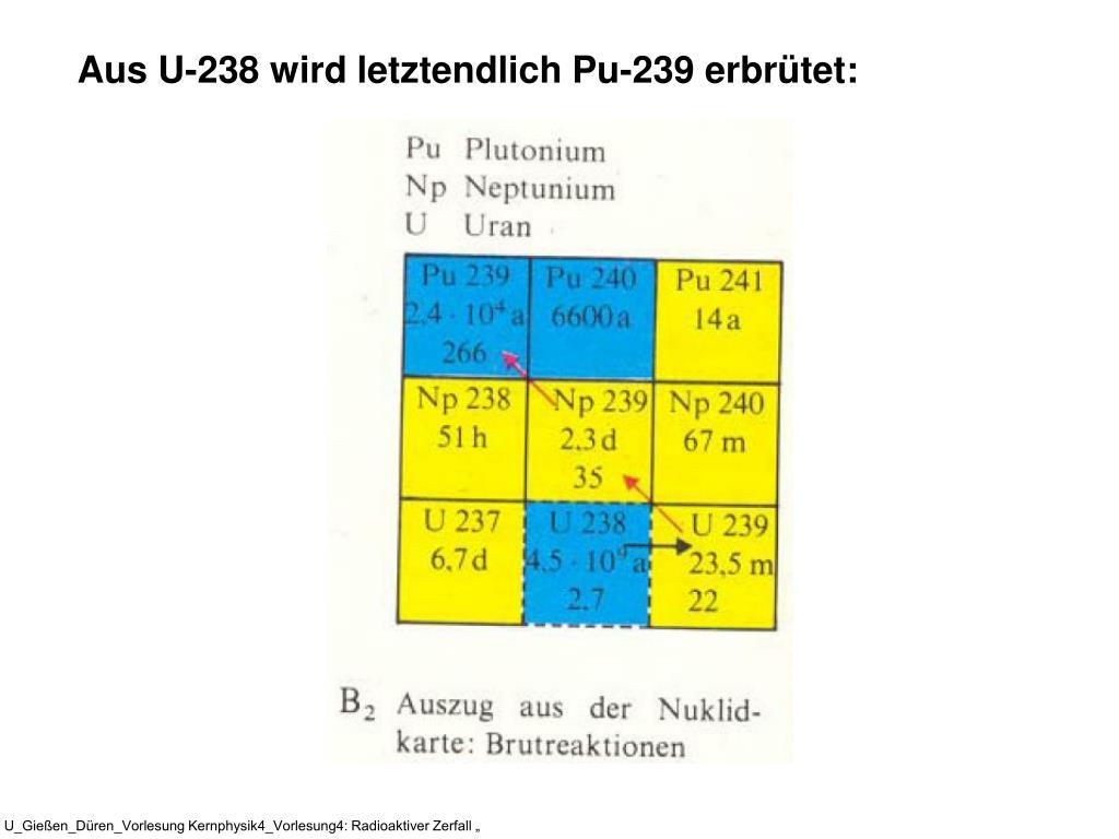 Aus U-238 wird letztendlich Pu-239 erbrütet: