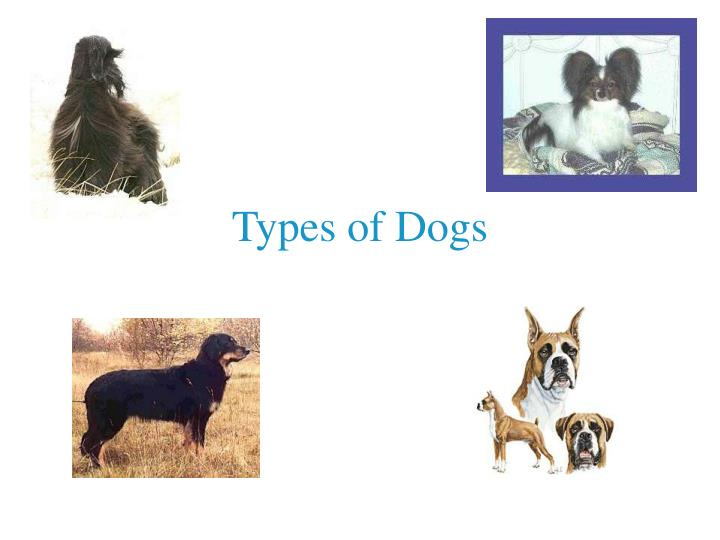 types of dogs n.