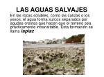 las aguas salvajes5