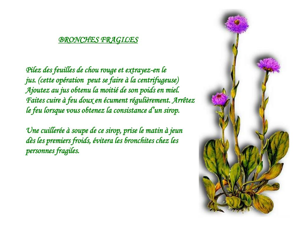 BRONCHES FRAGILES