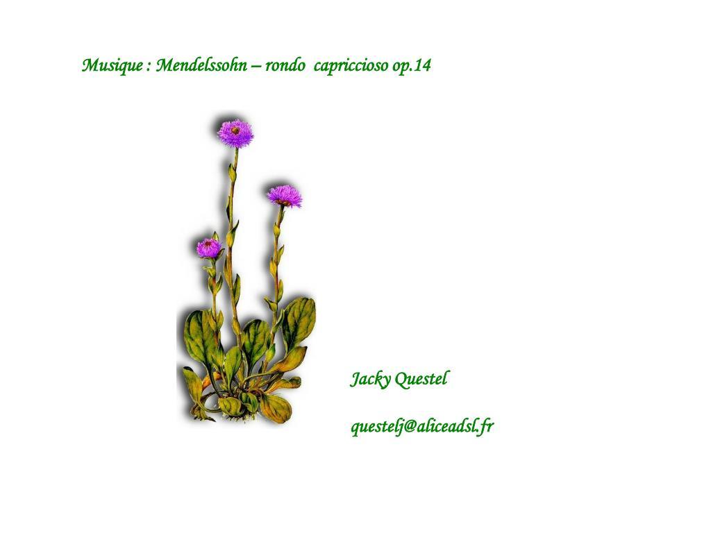 Musique : Mendelssohn – rondo  capriccioso op.14