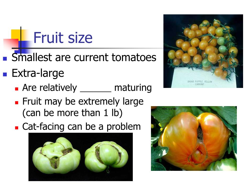 Fruit size
