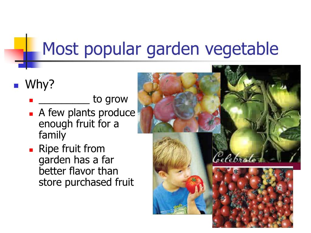 Most popular garden vegetable