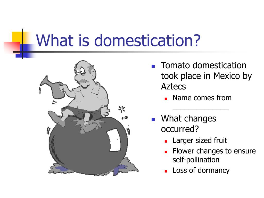 What is domestication?