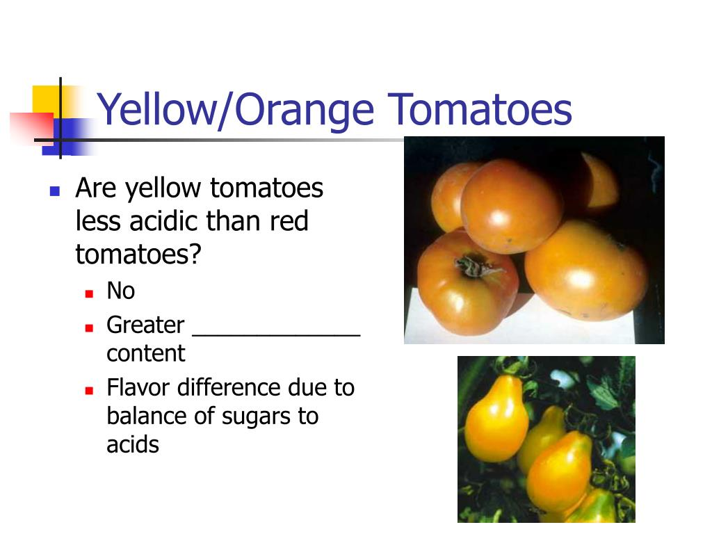 Yellow/Orange Tomatoes