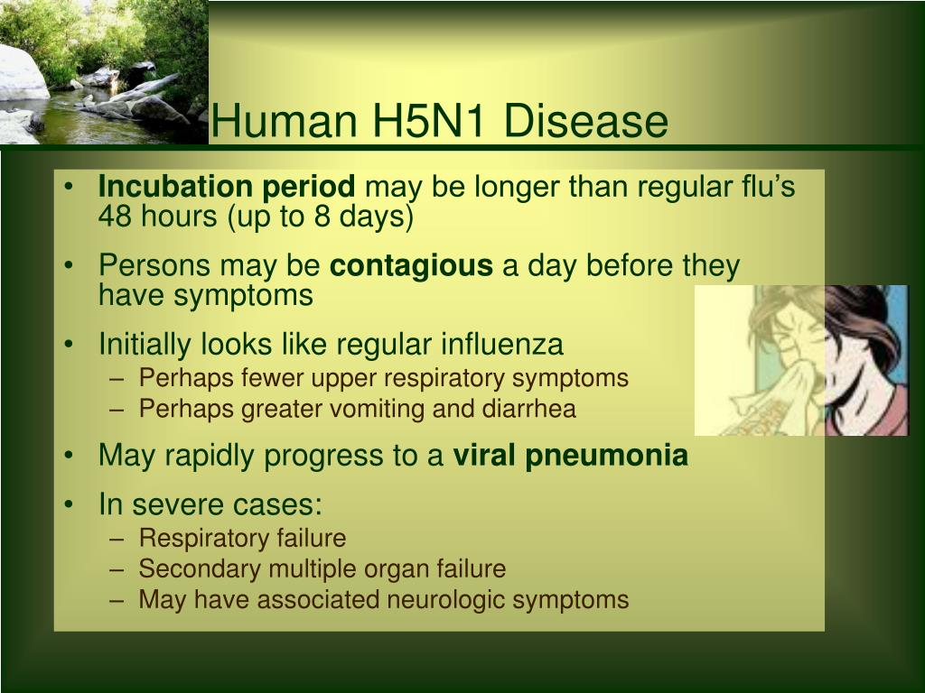 Human H5N1 Disease
