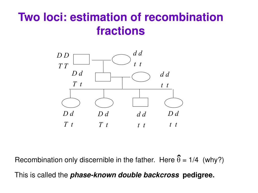Two loci: estimation of recombination fractions