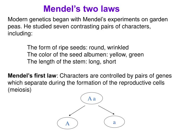 Mendel's two laws