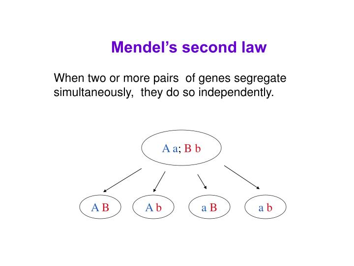 Mendel's second law
