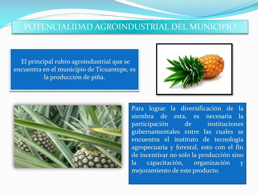 POTENCIALIDAD AGROINDUSTRIAL DEL MUNICIPIO