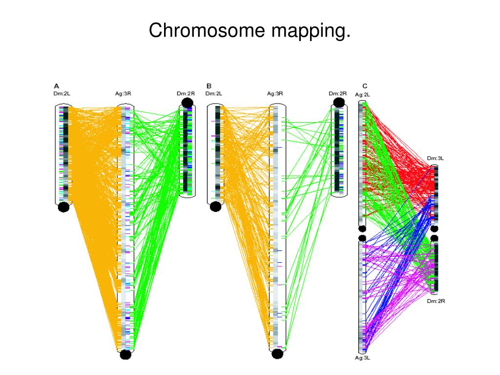 Chromosome mapping.